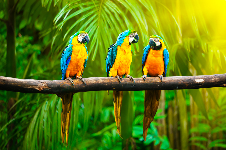 Magical Message From the Macaws